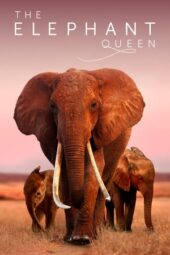 Nonton Online The Elephant Queen (2019) Sub Indo
